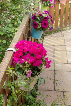 petunias: Flower pots on fence with pink petunias Stock Photo