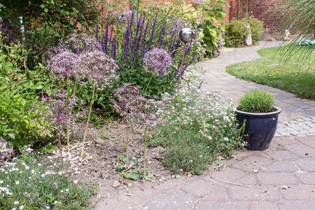 flower garden path: Perennial border with Allium Flower and tell