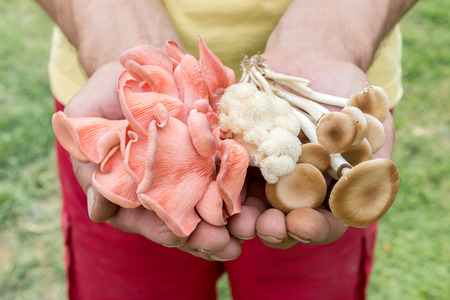 big mens hands holding different mushrooms