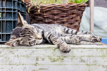 tabby cat: Un peque�o gato atigrado durmiendo en el patio