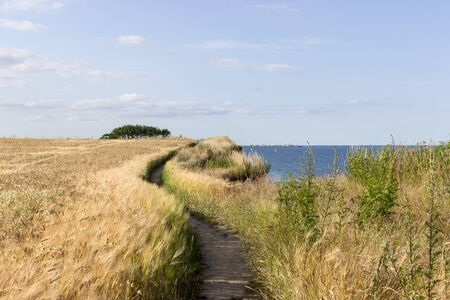 grain fields: Baltic landscape with hiking, barley field and the sea