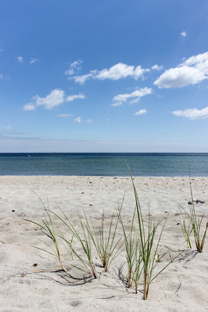 Sandy beach with grasses at the Baltic Sea