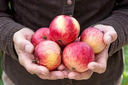 Handen die rode, rijpe appelen