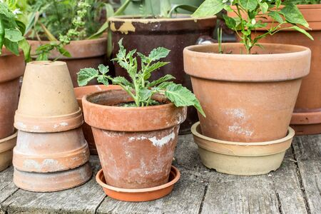 flowerpots: Flowerpots with vegetables
