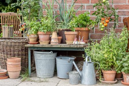 jardines flores: Las macetas con hierbas y verduras