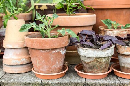 garden flower: Flowerpots with vegetables