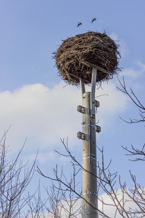 power pole: Stork nest on a power pole