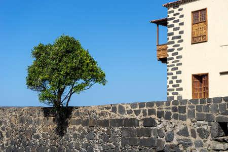 Wall with a tree at the port of Puerto de la Cruz on Tenerife