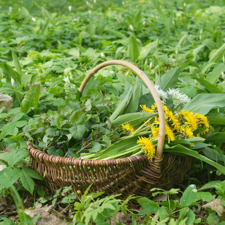 Allium flower: Basket with collected wild herbs in the forest Stock Photo