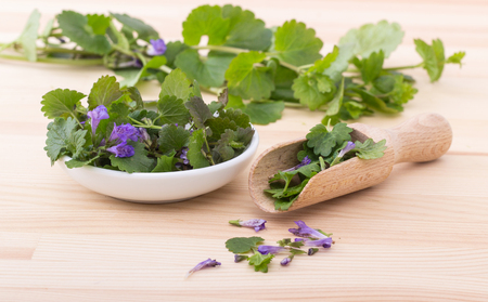 Porcelain bowl and wooden spoon with fresh ground ivy Stock Photo