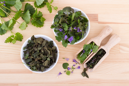 Porcelain bowls and wooden spoon with fresh and dried ground ivy