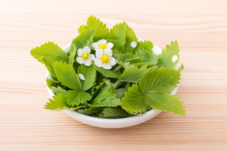 Fresh leaves and flowers of the wild strawberry Stock Photo