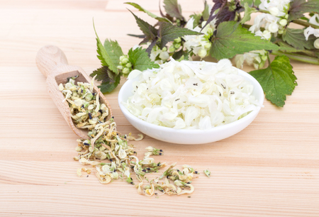 Fresh and dried white archangel Stock Photo