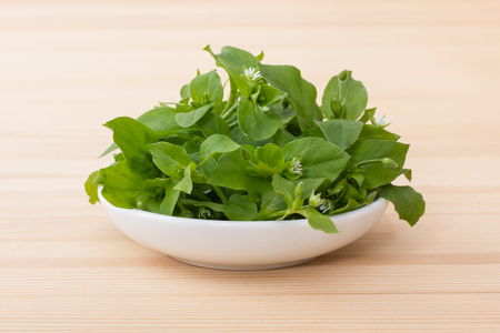 White porcelain bowl with chickweed Stock Photo