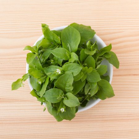 White porcelain bowl with chickweed 写真素材