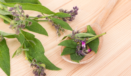 Spoon with Comfrey and Comfrey Stock Photo