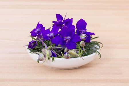 Bowl of blooming blue aconite Stock fotó