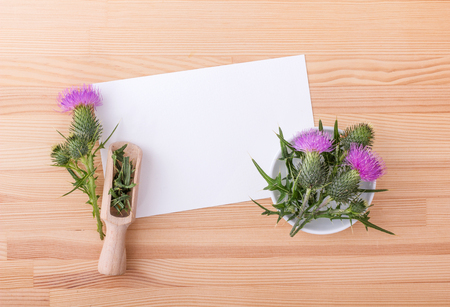 flowering Mary thistle and copyspace Stock Photo