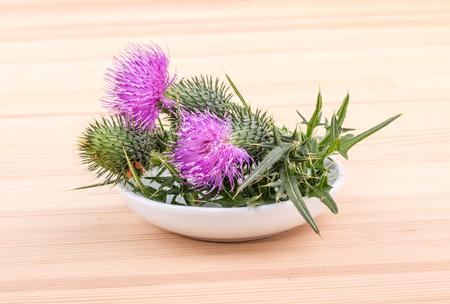 꽃이 만발한 도자기 메리 엉 겅 퀴 스톡 콘텐츠