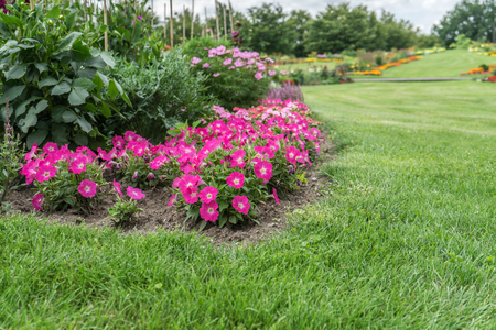 Flowerbed with pink flowering flowers and lawn