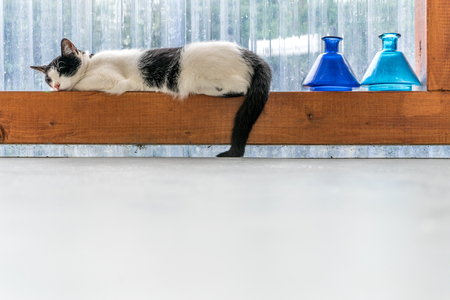 black-and-white cat sleeping on a wooden beam