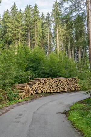 Coniferous forest with forest path and wood pile Standard-Bild