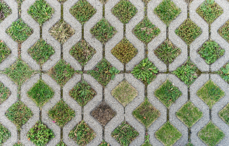 Paving stones with different grasses and wild herbs Standard-Bild