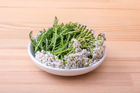 bowl of fresh flowers and leaves of yarrow with a wooden background Standard-Bild