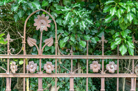 Decorative, rusty iron fence with blossom pattern and ivy in the background Standard-Bild