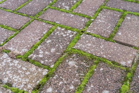 Pattern from paving stones with moss and lichen Standard-Bild