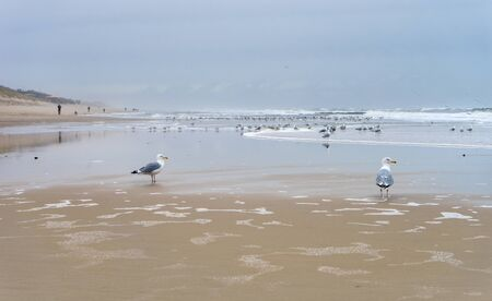 Lonely coastal landscape of the island of Sylt in winter with seagulls Standard-Bild