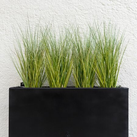 Black planter with grasses against a white background