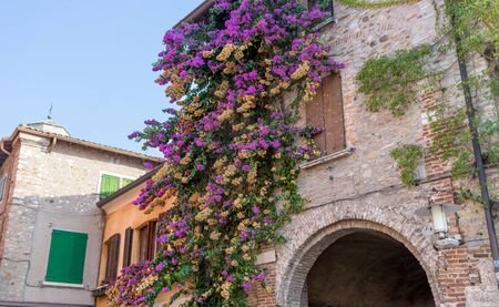 Red flowering bougainvillea in front of a house in Sirmione