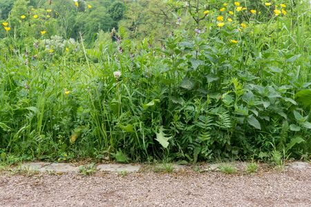 Path with lush growing wild plants in spring