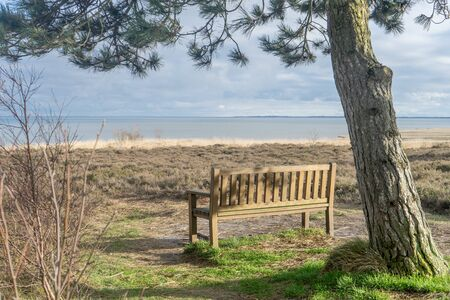 Wooden bench under a pine tree on the mud flat on the island of Sylt Standard-Bild