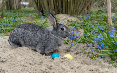 Bunny with Easter eggs in the garden