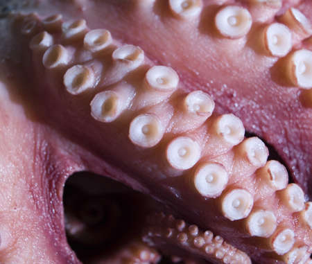 촉수: This is a close up texture of an octopus tentacle