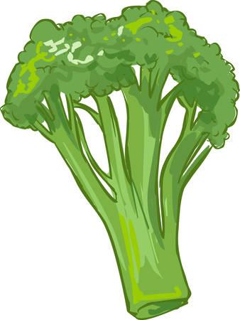 witte achtergrond vector illustratie van een gezonde groente broccoli Vector Illustratie