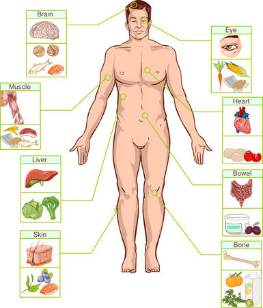 intestines: Vector illustration of a Healthy lifestyle, and nutrition concept.