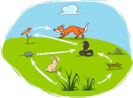 Vektor-Illustration eines Ökosystem-Diagramm Standard-Bild - 52610622