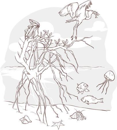 海洋生態系のベクトル イラスト  イラスト・ベクター素材
