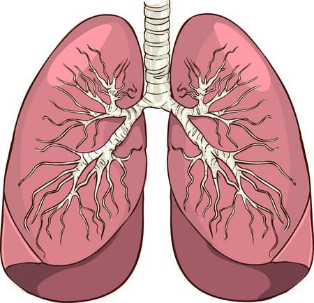 Ilustración vectorial de un pulmón detalla ilustración médica