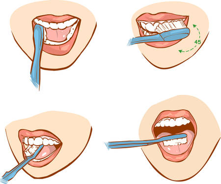 muela: ilustración vectorial blanco apaisada de un cepillado dental Vectores
