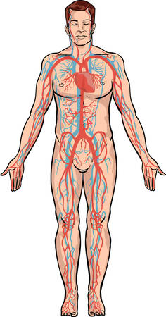 essays: white backround Vector illustration of a circulatory system