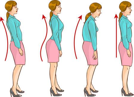 columna vertebral: Vector ilustraci�n de un La posici�n correcta de la columna vertebral