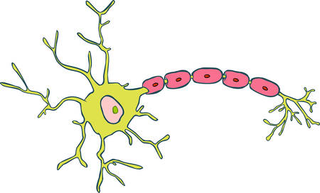 ms: white background vector illustration of a Neuron Illustration