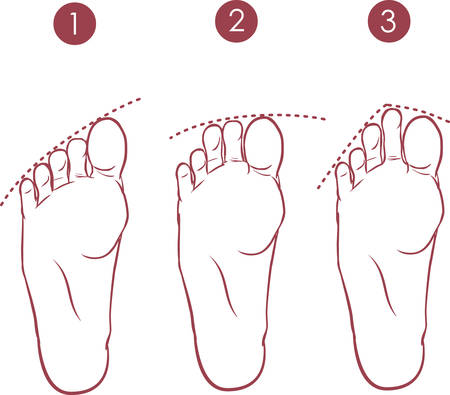 toes: vector illustration of a form of toes