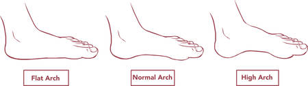 extremity: vector illustration of a flat and normal feet