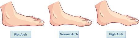ilustracji wektorowych z płaskiej i normalnych stóp