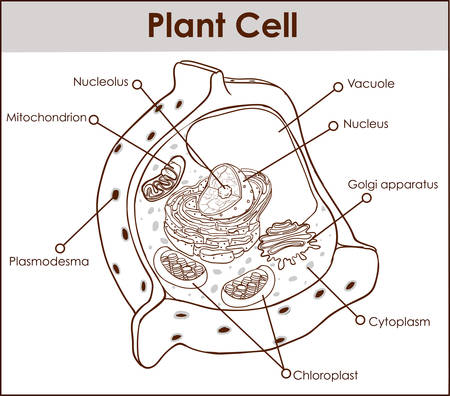 Plant cell isolated on white photo-realistic vector illustration. Иллюстрация